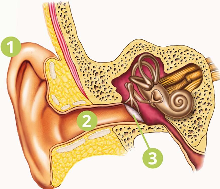 Das Ohr – Hör Centrum